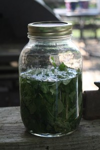 oregano in vodka